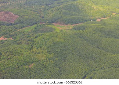 Bird eyes view Teak trees in an agricultural forest, Thailand