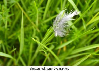 bird feather lying on the grass, southern Bohemia, Czech Republic
