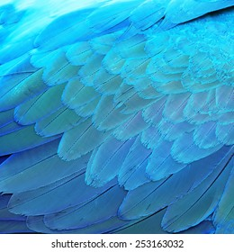 Bird feathers, Blue and Gold Macaw feathers, texture background abstract