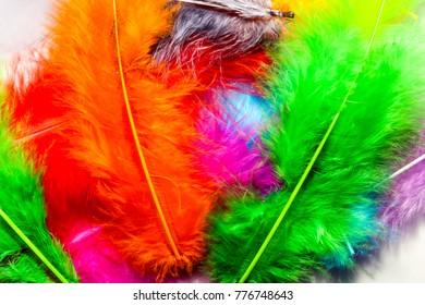 bird feathers multicolored