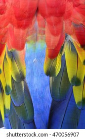 Bird  feathers, Scarlet Macaw feathers.