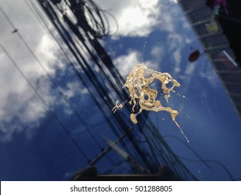 Bird feces on Windshield, from birds to perch on power lines.