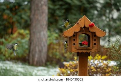 bird feeder in autumn, autumn garden birds peck food from bird feeder, autumn bird food