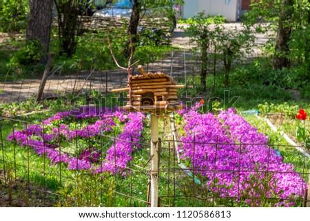 Bird Feeder Flowering Purple Primroses Garden Stock Photo Edit Now