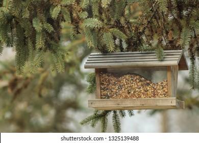 Bird Feeder Full of Birdseed Hanging From a Pine Tree