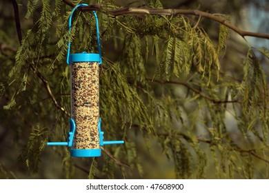 Bird feeder on a mesquite tree