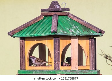 bird feeder with sparrows