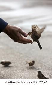 bird feeding hand