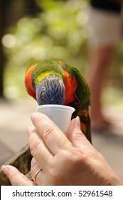 Bird Feeding From Hand at the Zoo