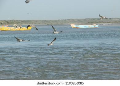 bird fish wallpepar