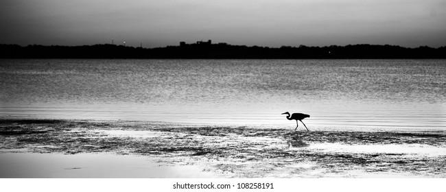 Bird fishing around Merrit Island at sunset