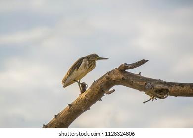 Bird fishing by the lake