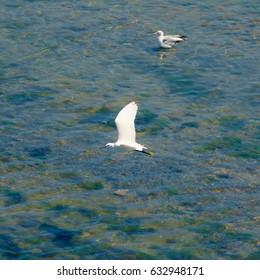 Bird fishing at low tide
