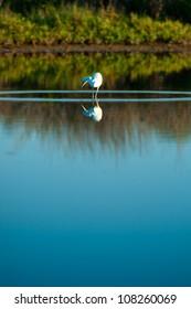 Bird fishing at Merrit Island at daylight
