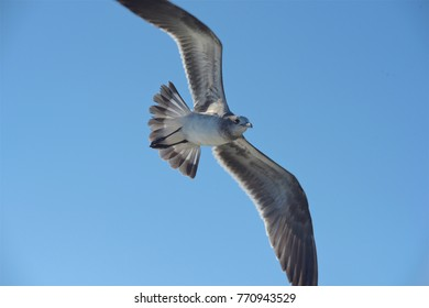 a bird flaying over the blue sky