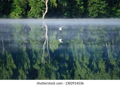 The bird flies in the fog over the river and the trees are reflected in the water.
