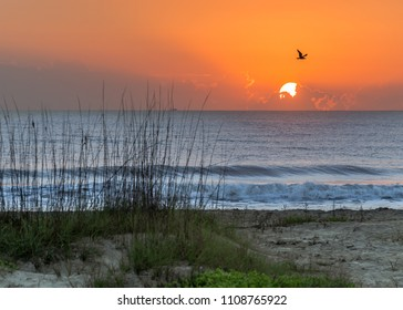 A bird flies in front of the sunrise in Coco Beach, Florida, USA.