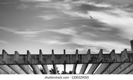 Bird flies through a light cloudy sky