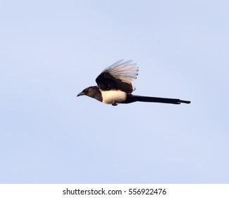 bird in flight against the sky