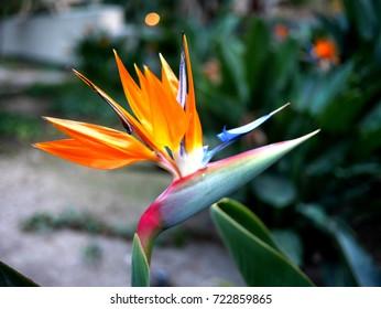 Bird flower in a park