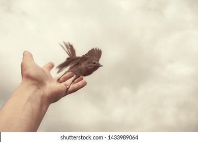 bird fly out from a human hand