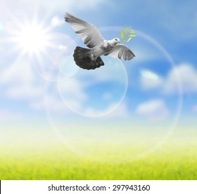 Bird flying  in the air , all concept , peace and spirituality