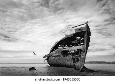 Bird flying away from Janie Seddon Shipwreck on Motueka foreshore, Nelson Tasman, South Island. Black and white image of abandoned and moody shipwreck.