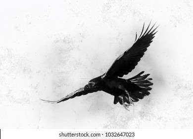 Bird - flying black raven, black and white photography, halloween