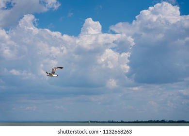 Bird flying in blue cloudy sky over the lake.