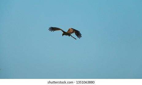 a bird flying in blue sky