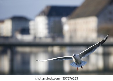 Bird flying in the city