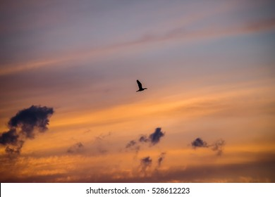 Bird flying far away with beauty colorful sky at dusk