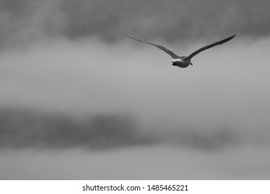 Bird Flying Into the Clouds Black and White