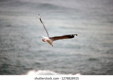 Bird flying on water