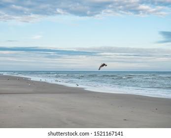 Bird flying over Dutch Wadden Sea coastline