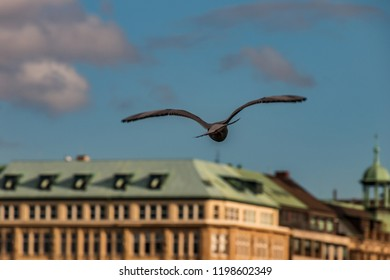 bird flying over the river