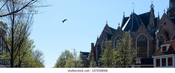 Bird is flying over the rofs of Amsterdam
