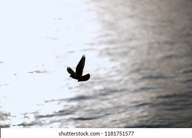A bird flying over the sea