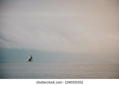 Bird flying over sea on overcast cloudy summer day in Iceland, vintage feel, copy space.
