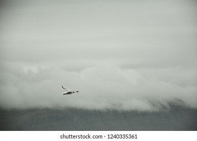Bird flying over sea on overcast cloudy summer day in Iceland, vintage almost greyscale look, copy space.