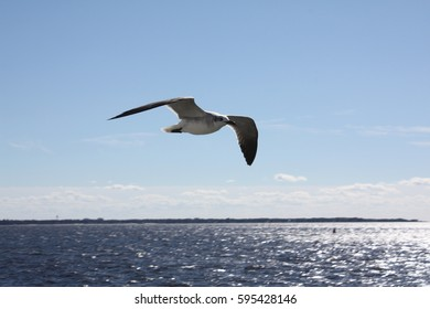 bird flying over water on a sunny day