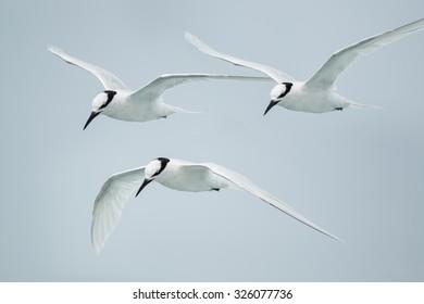 bird flying, sea gull abstract  freedom life