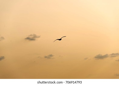bird flying silhouette
