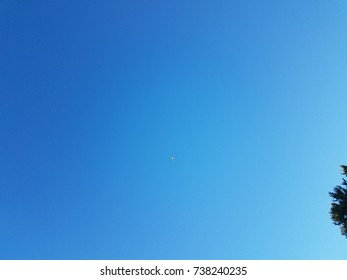 a bird flying in the sky