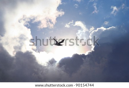 Bird flying in the sky with a dramatic cloud formation in the background. Light shining trough which gives a symbolic value of life and hope.
