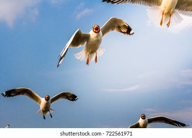 bird flying in the sky, Freedom concept, soft-focus