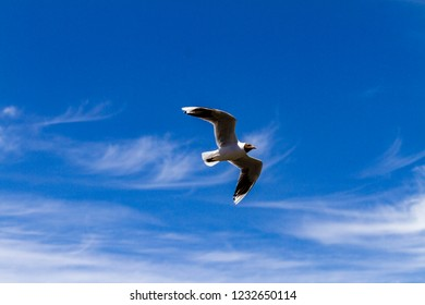 Bird flying in a sunny sumer day in Chile