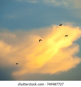 Bird flying in the sunset
