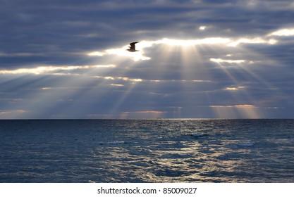 bird flying through day break in the morning over the Atlantic Ocean