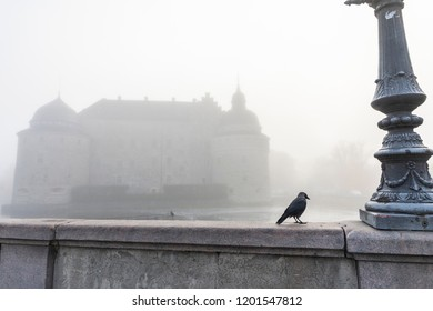 Bird in the fog town background